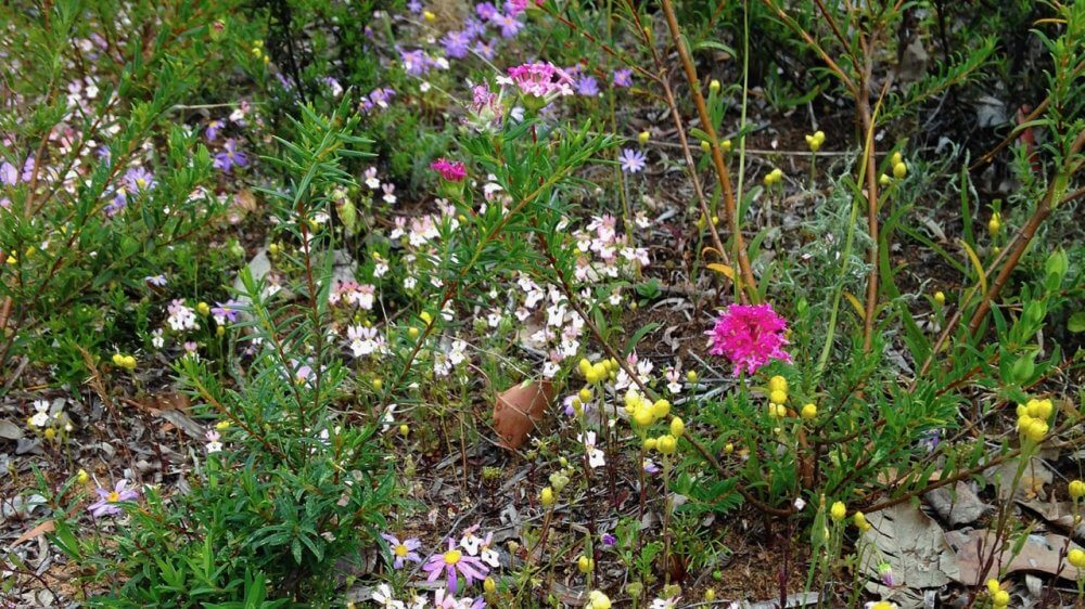 Hunting the swathes of colour in our wonderland of wildflowers
